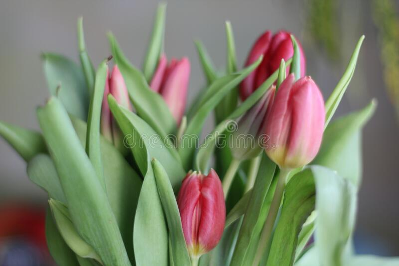 Spring flowers. Tulip bouquet on the bokeh background.  stock photos
