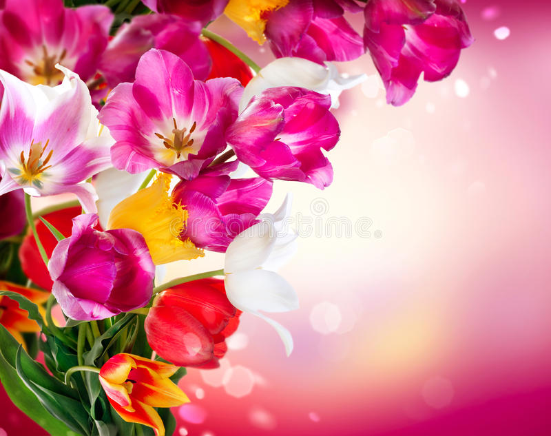 Download Spring Tulips stock photo. Image of floral, flower, concept - 30227770