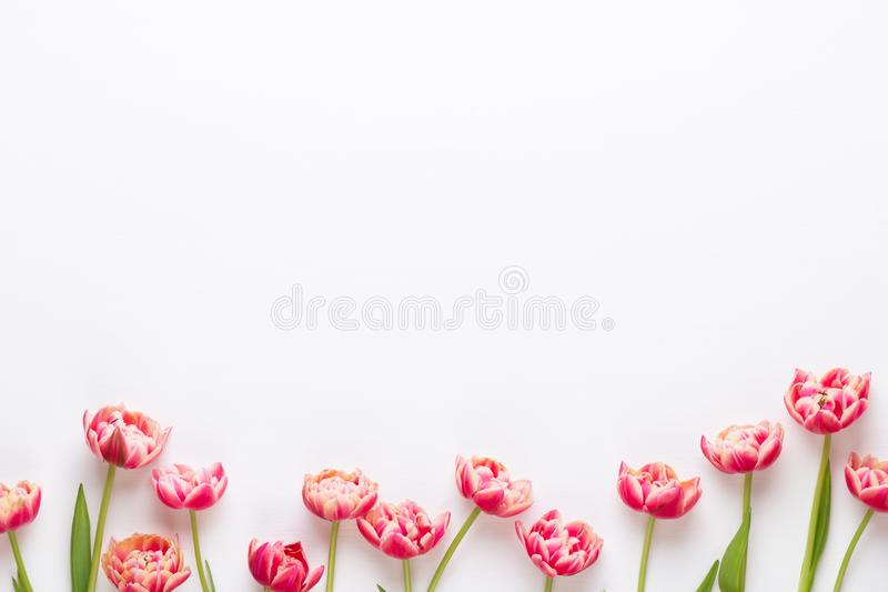 Spring flowers tulips on pastel colors background. Retro vintage style stock photography