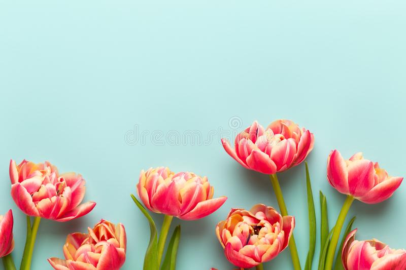 Spring flowers, tulips on pastel colors background. Retro vintage style royalty free stock photography