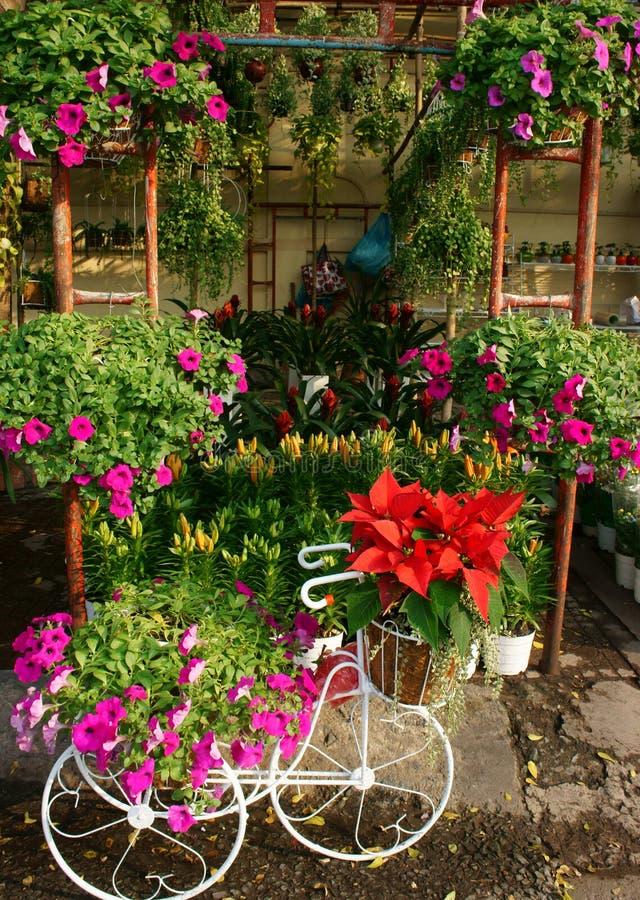 Spring flowers, Vietnam flower market royalty free stock images
