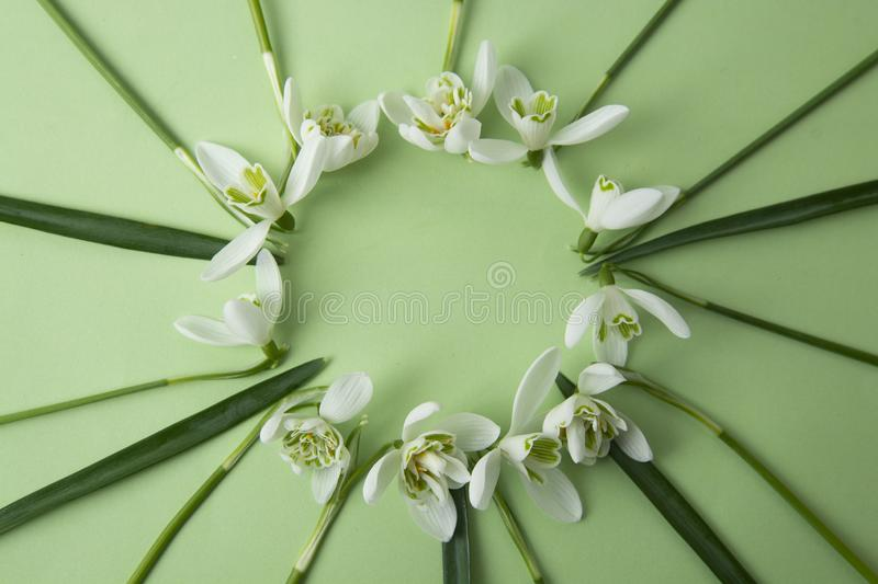 Spring flowers - white snowdrops Galanthus nivalis arranged in circle, on a green background with space for text. Top view, flat royalty free stock photo