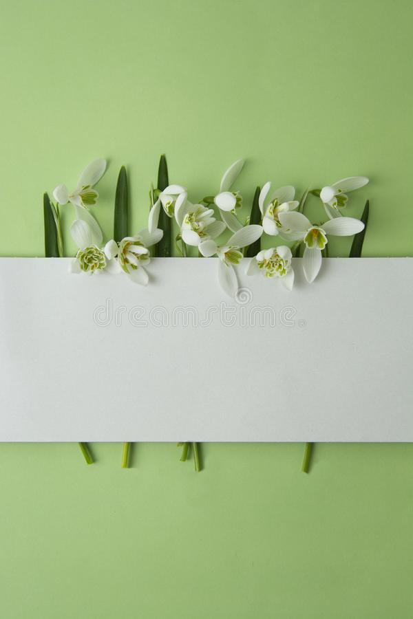 Spring flowers, white snowdrops over green background. Abstract background for greeting cards. space for text royalty free stock photos