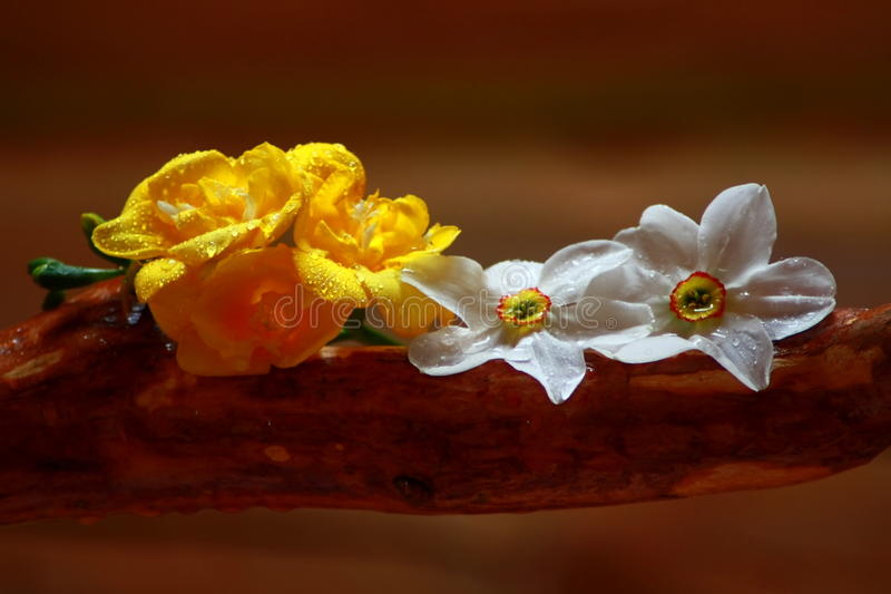 Spring flowers and wood. royalty free stock photography