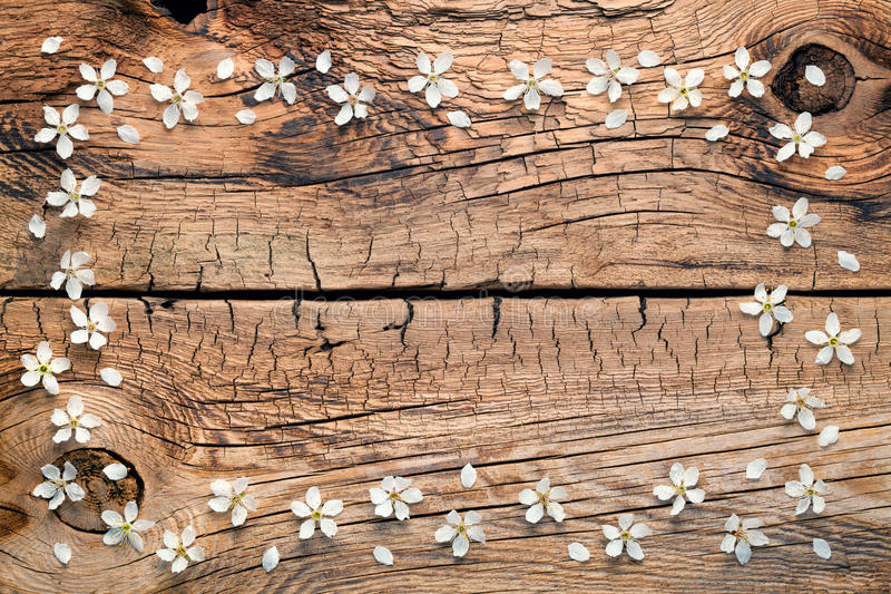 Spring Flowers on Wood Background stock images