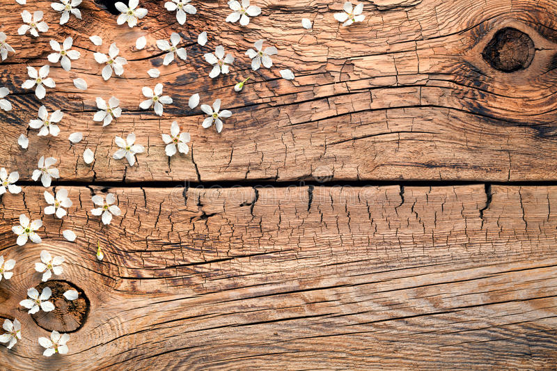 Spring Flowers on Wood Background royalty free stock photos