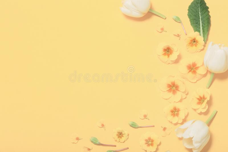 Spring flowers on yellow background. The spring flowers on yellow background stock photos