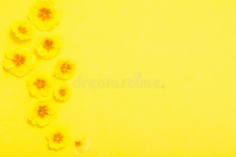 Spring flowers on yellow background. The spring flowers on yellow background stock image