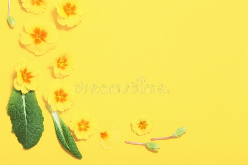 Spring flowers on yellow background. The spring flowers on yellow background stock images