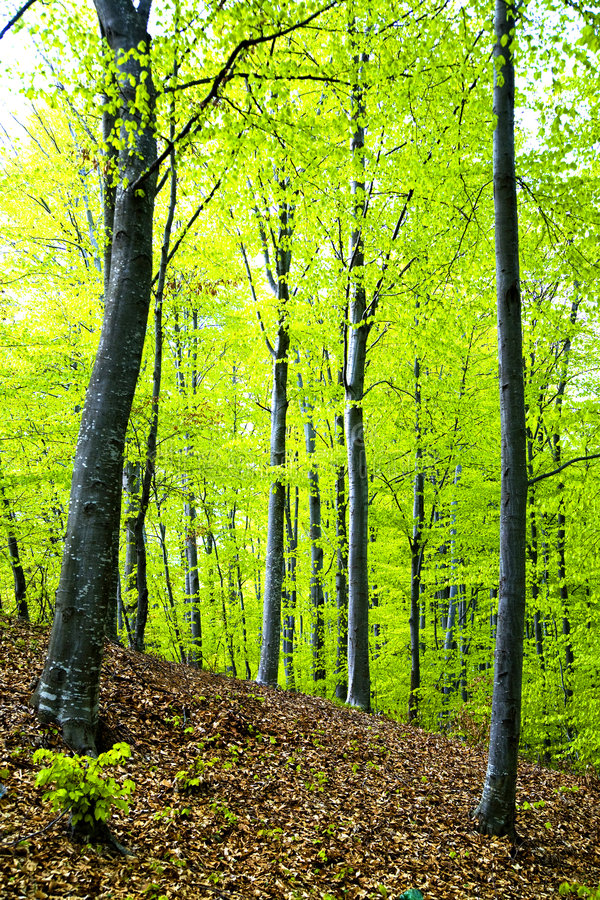 Spring forest royalty free stock photography