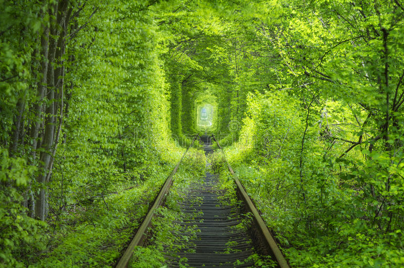 Spring forest around rail way tunnel stock image