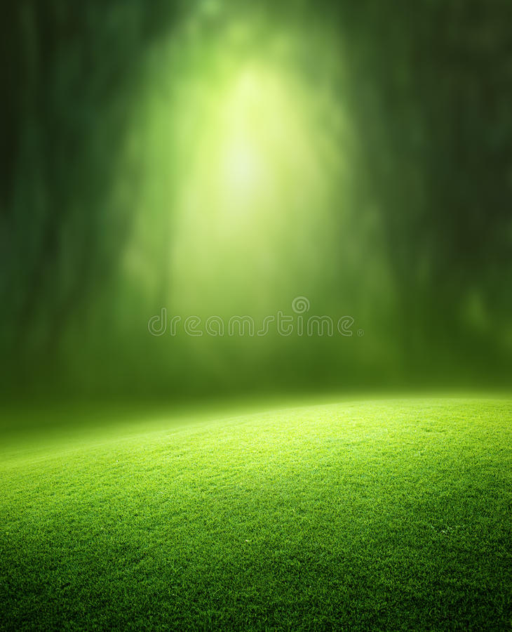Free Spring Forest Background Royalty Free Stock Photo - 33617425