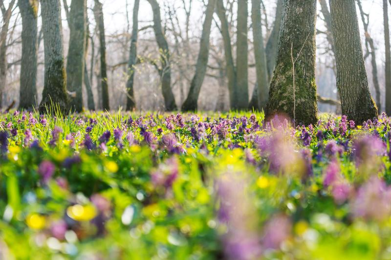 Spring forest stock photos