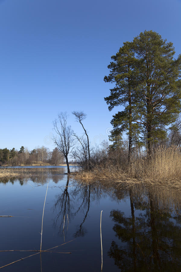 Download Spring on forest lake stock image. Image of landscape - 17845881