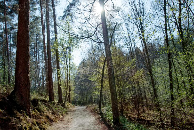 Download Spring forest stock photo. Image of springtime, spring - 112677544