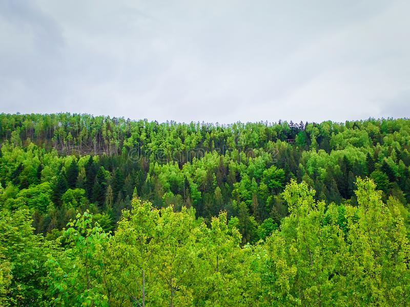 Spring forest texture with different shades of green. Lot of trees on the mountain hill as a pattern. Wild nature landscape, fresh stock images