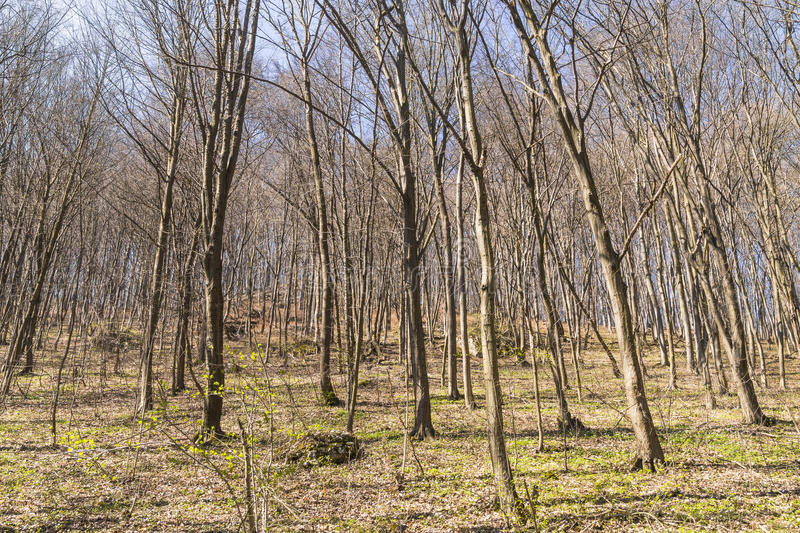 Download Spring in forest stock photo. Image of country, foliage - 39506592