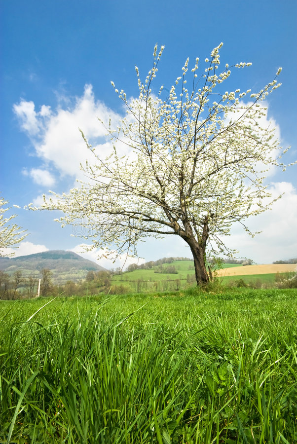 Spring in France royalty free stock images