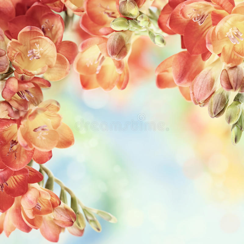 Free Spring Freesia Flowers On Bokeh Background Royalty Free Stock Photo - 29840265