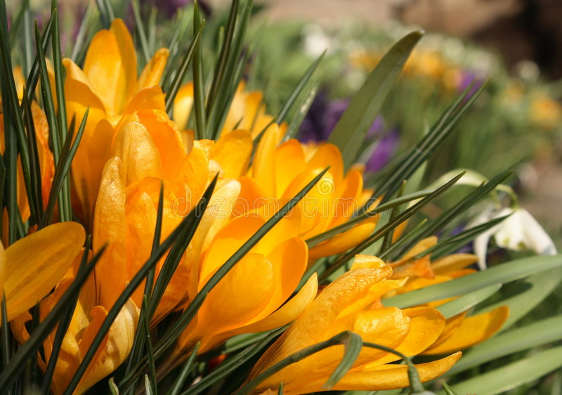 Spring in garden royalty free stock photography