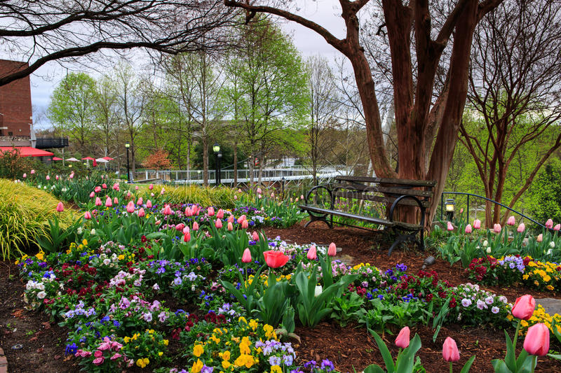 Spring Garden Falls Park Greenville SC. Garden of spring blooming flowers and bench in Falls Park on the Reedy near the Liberty Bridge in Greenville, South royalty free stock photos