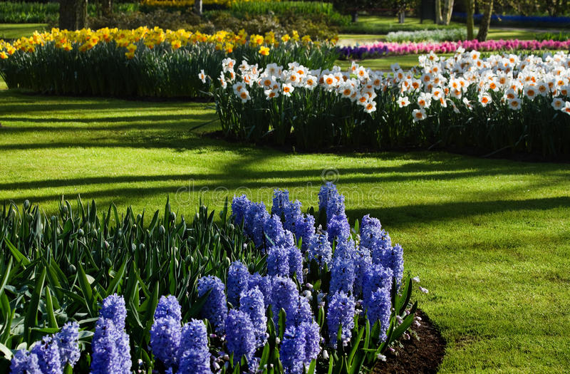 Download Spring Garden With Hyacinths And Daffodils Stock Photo - Image of color, flowers: 14110566