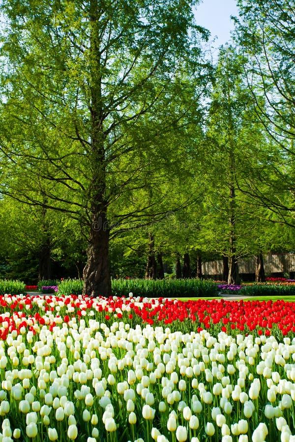 Spring garden landscape royalty free stock photography