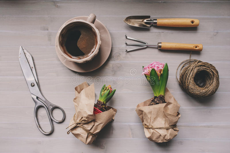 Spring garden preparations. Hyacinth flowers and vintage tools on table, top view. Seasonal hobby at home. Selective focus stock photos
