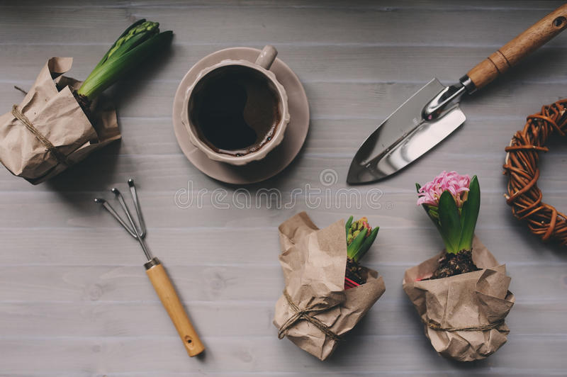 Spring garden preparations. Hyacinth flowers and vintage tools on table, top view. Seasonal hobby at home. Selective focus royalty free stock photos