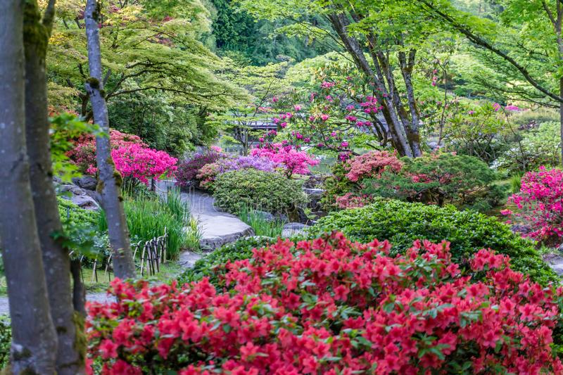 Spring Garden Profuions royalty free stock images