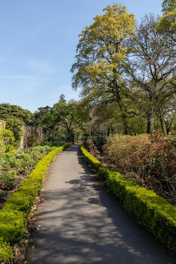 Spring garden with walking path and trees royalty free stock image