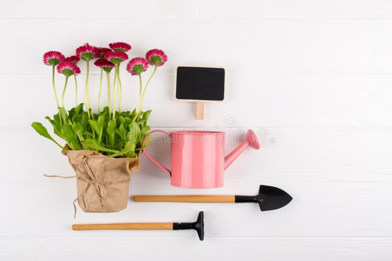 Spring Garden Works Concept. Gardening tools, flowers in pots and watering can on white table. flat lay. Spring Garden Works Concept. Gardening tools, flowers in royalty free stock image