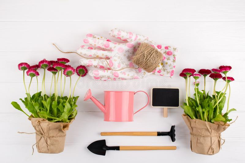 Spring Garden Works Concept. Gardening tools, flowers in pots and watering can on white table.  flat lay. Spring Garden Works Concept. Gardening tools, flowers royalty free stock images