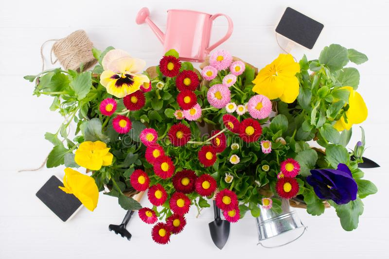 Spring Garden Works Concept. Gardening tools, flowers in pots and watering can on white table. flat lay. Spring Garden Works Concept. Gardening tools, flowers in royalty free stock photos