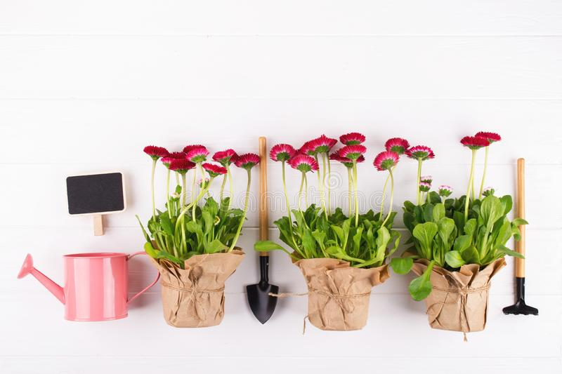 Spring Garden Works Concept. Gardening tools, flowers in pots and watering can on white table.flat lay. Spring Garden Works Concept. Gardening tools, flowers in royalty free stock images