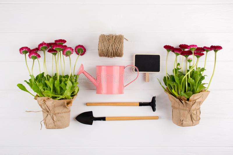 Spring Garden Works Concept. Gardening tools, flowers in pots and watering can on white table. top view,. Flat lay stock photos