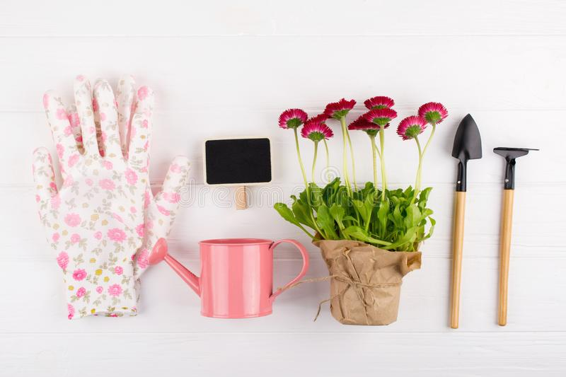 Spring Garden Works Concept. Gardening tools, flowers in pots and watering can on white table. top view,. Flat lay royalty free stock photo