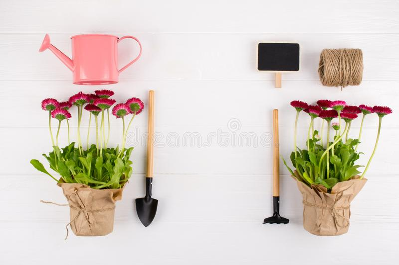 Spring Garden Works Concept. Gardening tools, flowers in pots and watering can on white table.  flat lay. Spring Garden Works Concept. Gardening tools, flowers stock image
