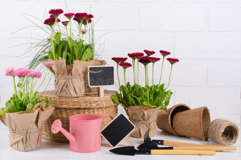 Spring Garden Works Concept. Gardening tools, flowers in pots and watering can on white wooden  table. Spring Garden Works Concept. Gardening tools, flowers in royalty free stock image