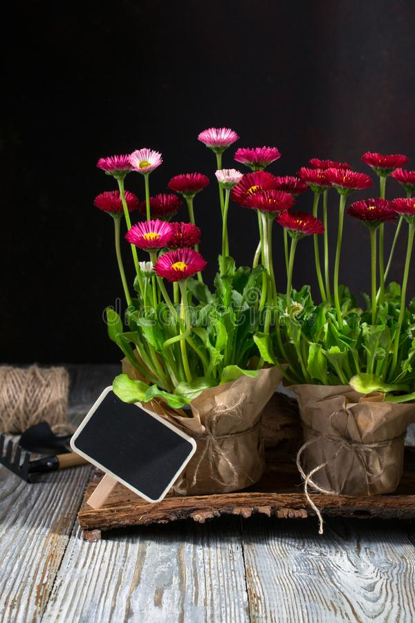Spring Garden Works Concept. Gardening tools, flowers in pots and watering can on wooden table. Spring Garden Works Concept. Gardening tools, flowers in pots and stock photos