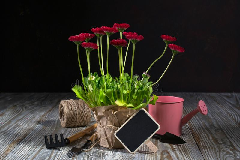 Spring Garden Works Concept. Gardening tools, flowers in pots and watering can on wooden table. Spring Garden Works Concept. Gardening tools, flowers in pots and stock image