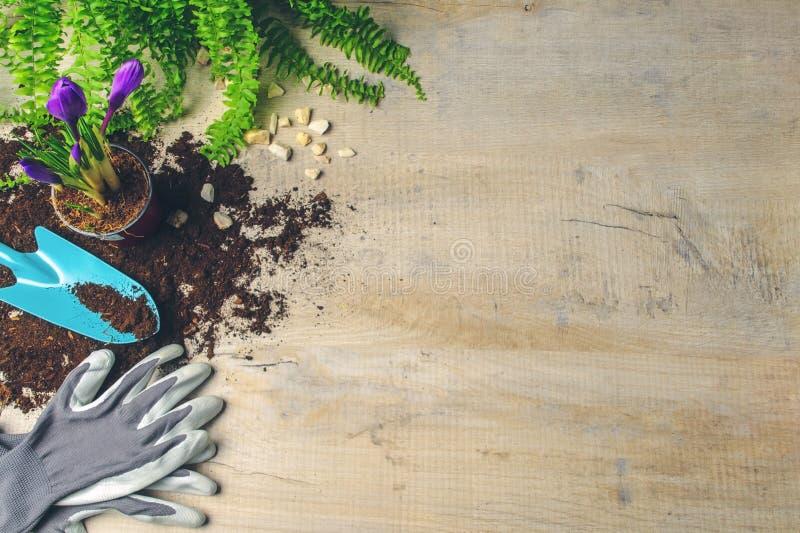 Spring gardening background. Homework in the garden. stock photo