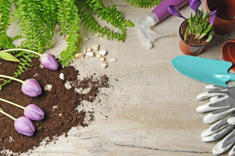 Spring gardening background. Homework in the garden. stock photos