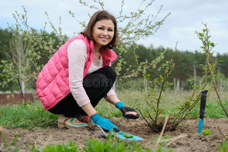 Spring gardening, female gardener working in gloves with garden tools fertilizes the soil with mineral granulated fertilizers royalty free stock photography
