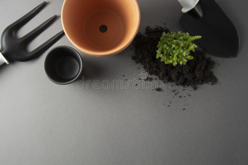 Spring gardening. Planting indoor plant. Succulent, cactus plant. Garden tools, flower pot, gray background with copy space stock photo