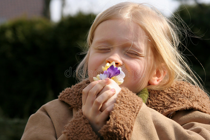 Spring girl. Little girl smelling crocuses stock photos