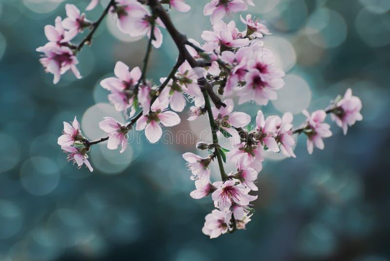 Download Spring stock image. Image of blossom, bloom, floweringtree - 88933419