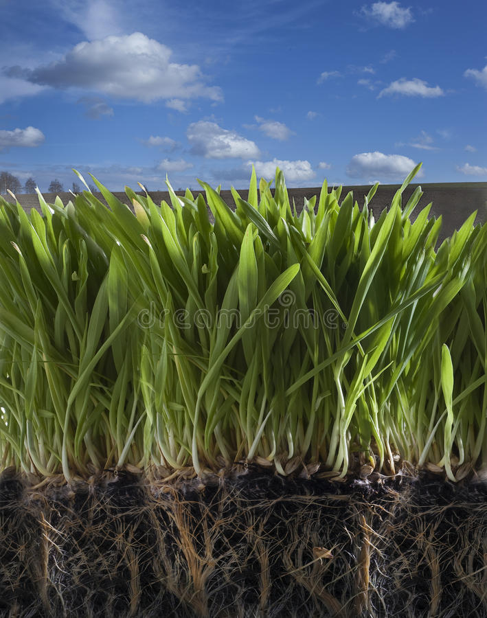 Download Spring grass stock photo. Image of growing, field, color - 13698158