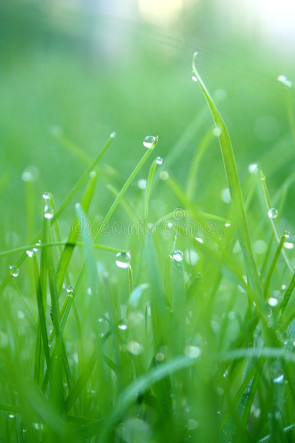 Download Spring Grass stock image. Image of season, green, droplets - 514013