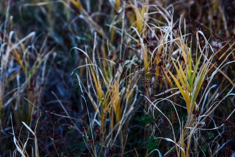 Spring grass closeup. In the field royalty free stock images
